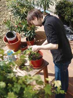 Person potting plants
