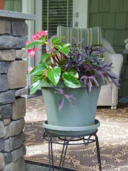 Anna's potted plants