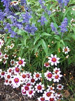 Anna's flower garden