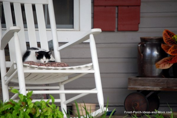 Sweet cat sitting on front porch rocking chair