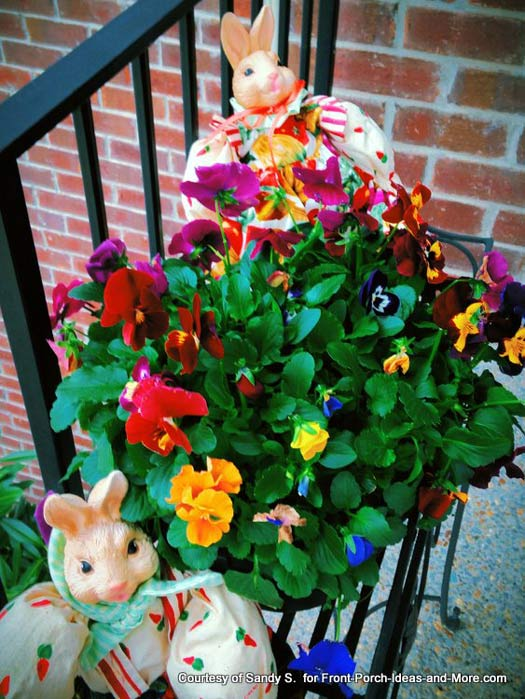 Sandy's pansies in planter