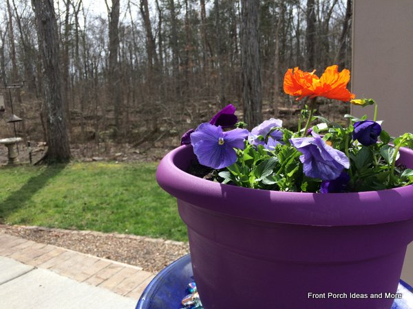 We planted colorful pansies and poppies in a pot in the corner of our porch