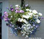 hanging basket on porch
