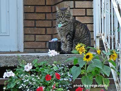 dark grey cat sitting pretty on front porch